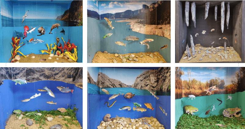 El treball per projectes: maquetes, hàbitats, animals aquàtics